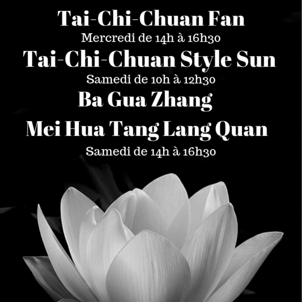 https://ecoleduliondor.fr/wp-content/uploads/2019/09/Tai-Chi-Chuan-Stle-Sun-1-2-600x600.png